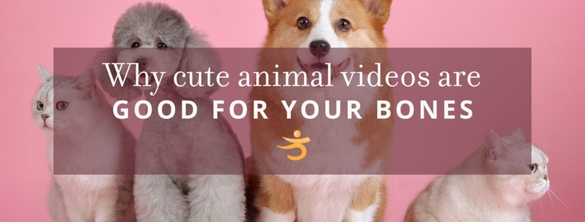 Cute animal videos are good for bones